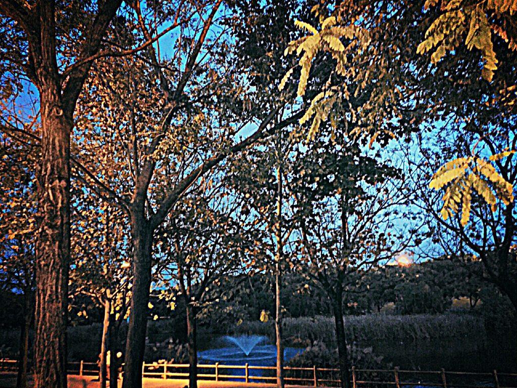 naturaleza en la ciudad parque miraflores