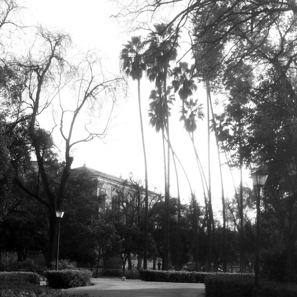 palmeras en el parque de maria luisa